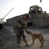 Собака друг человека фото